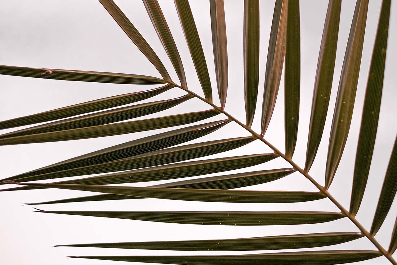 palm-leaves2